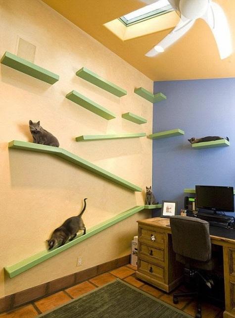 paraiso para gatos 2
