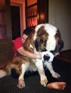 perros enormes 10