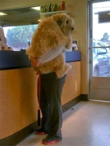 perros enormes 2