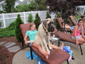 perros enormes 3