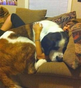 perros enormes 4