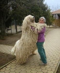 perros enormes 5
