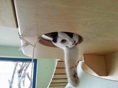 campo de juegos para gatos 2