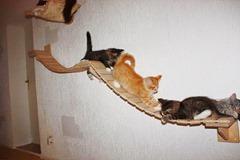 campo de juegos para gatos 4