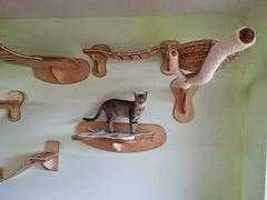campo de juegos para gatos 5