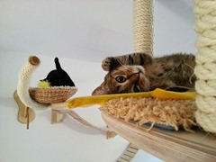 campo de juegos para gatos 6