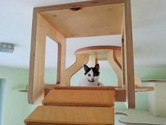 campo de juegos para gatos 7
